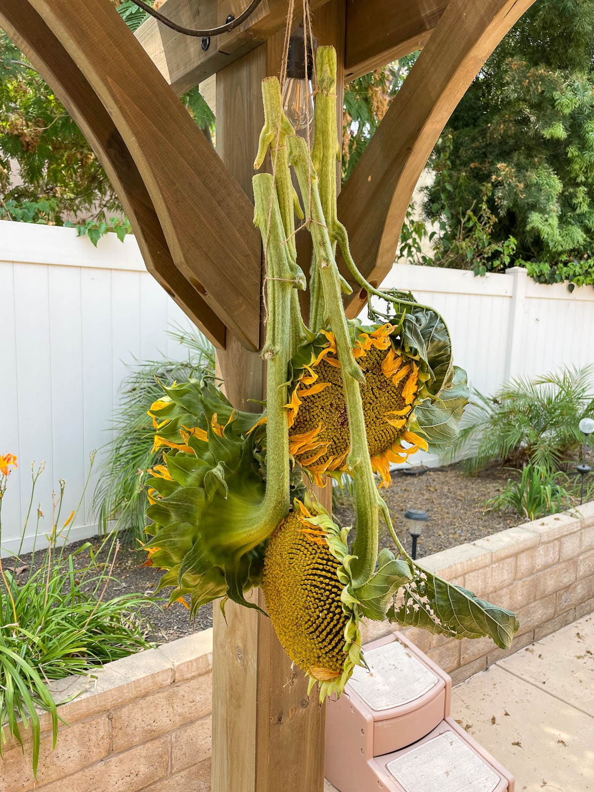 drying out sunflowers in a warm dry place